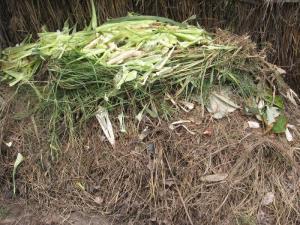 A garden variety compost pile